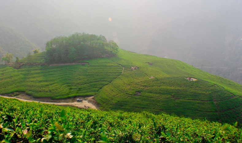 Everest Tea Garden at Bhotechaur VDC. (Picture Robert Woolam)